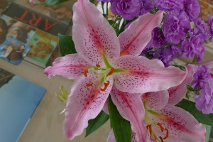 Pink Flower - Lilly