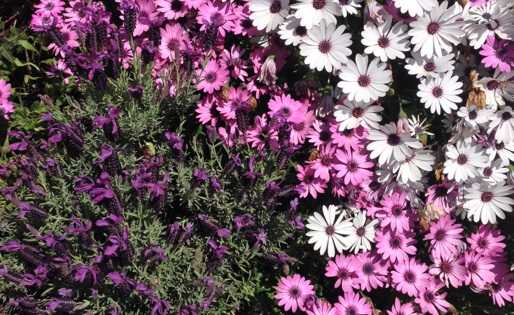 Flowers SF CA