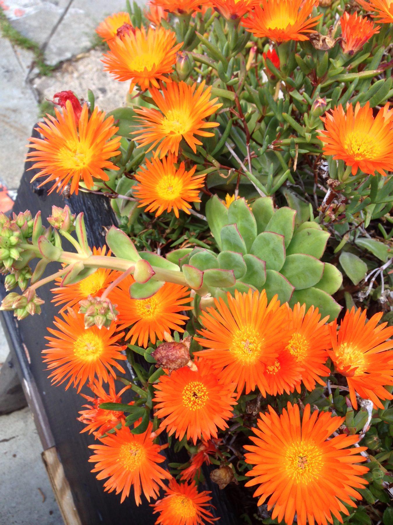 Flowers, GG Park, SF CA