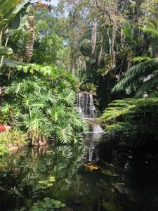 Koi Pond FL 2017