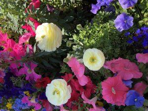 Flowers in Palm Springs, CA